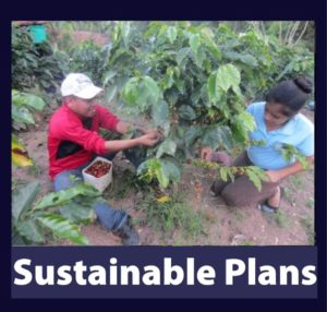 Sustainable Plans honduras